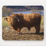 Ganado Bull, Escocia de la montaña Tapetes De Raton