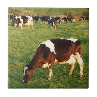 Ganado de Holstein Azulejo Cuadrado Pequeño