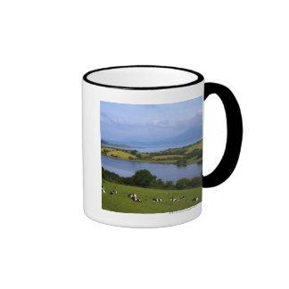 Ganado de Holstein-Fresian, bahía de Bantry, Taza De Dos Colores