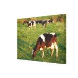 Ganado de Holstein Lona Estirada Galerías