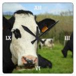 Ganado de Holstein Relojes
