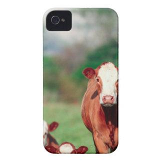 Ganado del hereford de Brown iPhone 4 Case-Mate Coberturas