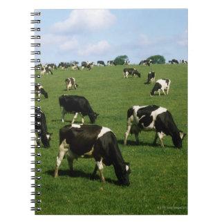 Ganado del Holstein-frisón, Irlanda Libro De Apuntes Con Espiral
