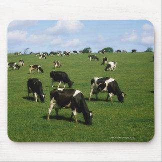 Ganado del Holstein-frisón, Irlanda Mouse Pad