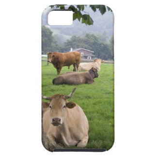 Ganado en tierras de labrantío rurales cerca de la iPhone 5 Case-Mate funda