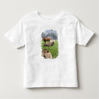Ganado en tierras de labrantío rurales cerca de la t-shirt