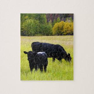Ganado negro de Angus que pasta en campo de hierba Puzzle