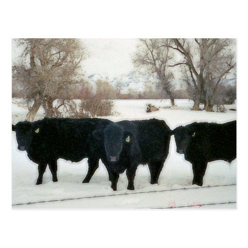 Ganado negro en nieve postal