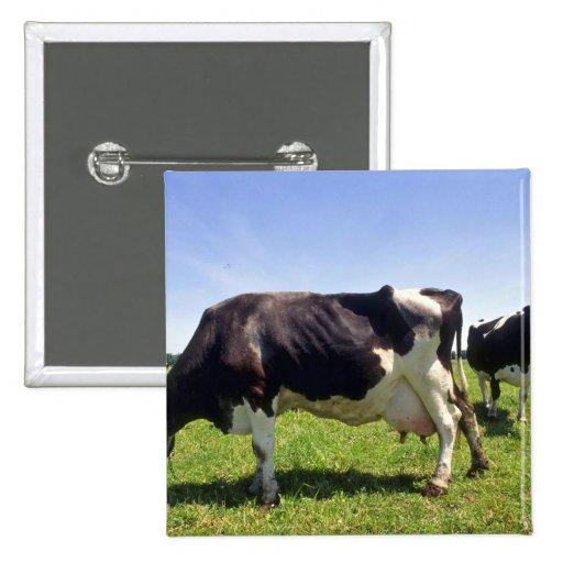 Ganados lecheros de Holstein Pin