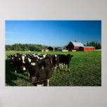 Ganados lecheros e impresión roja del granero poster