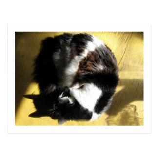 Gandalf, the cat,  Sun Nap Postcard