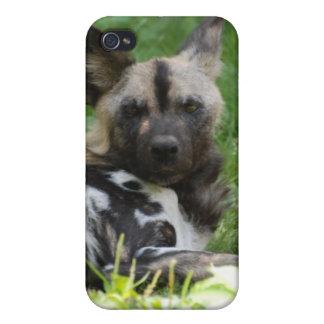 Gandulear el caso del iPhone 4 del perro salvaje iPhone 4 Carcasa
