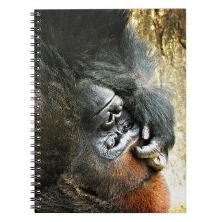 Gandulear el cuaderno del gorila