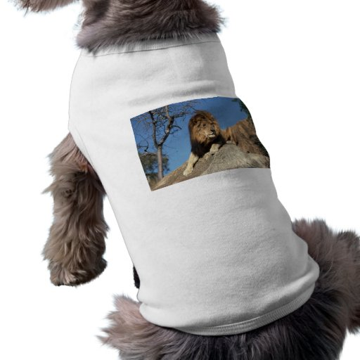 Gandulear el león camiseta de perro
