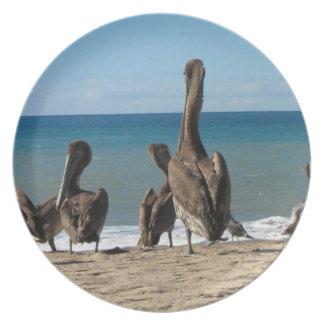 Gandulear pelícanos de la playa; Ningún texto Plato De Comida