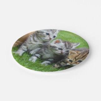 Gang of Adorable Kittens 7 Inch Paper Plate