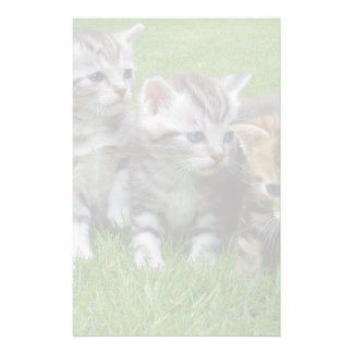 Gang of Adorable Kittens Stationery Paper