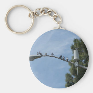 Gang Of Eight Pigeons Sitting On The Lamp Post Nea Key Chain