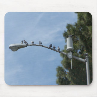 Gang Of Eight Pigeons Sitting On The Lamp Post Nea Mouse Pad