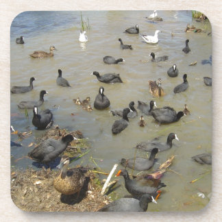 Gang of Water Fowl Drink Coaster
