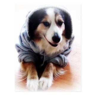 Gangsta Dog Wearing Hoodie Post Cards