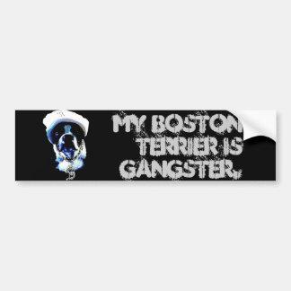 Gangster Boston Terrier Bumper Sticker
