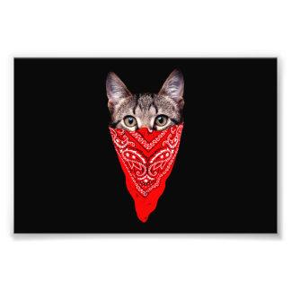 gangster cat - bandana cat - cat gang photo print