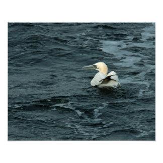 Gannet septentrional que descansa sobre el océano fotografía