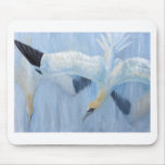 Gannets diving unique gifts for you mousemat