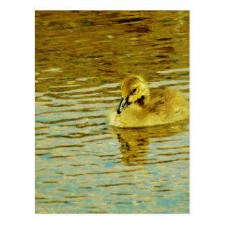 Ganso amarillo del bebé en agua postal