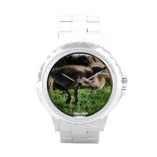 Ganso canadiense reloj