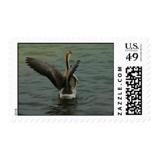 Ganso chino en el lago Travis Sello Postal
