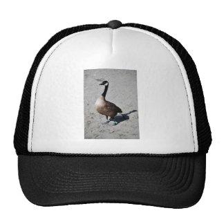 Ganso de Canadá en el lago goose, Anchorage Gorras De Camionero