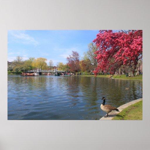 Ganso de la charca y de Canadá del jardín público  Impresiones
