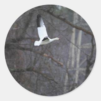 Ganso de nieve en vuelo pegatina redonda