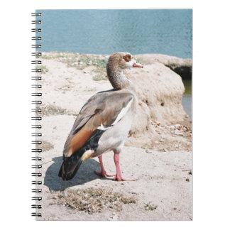 Ganso egipcio cuaderno