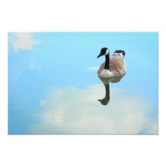 Ganso en las nubes arte con fotos