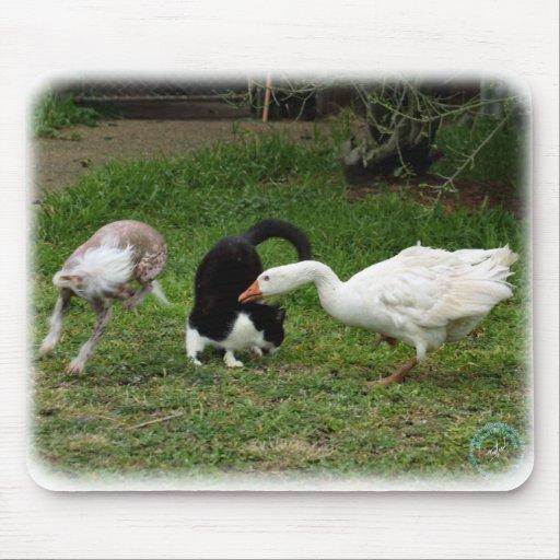 Ganso y gato y perro 9P31D-67 Tapetes De Raton