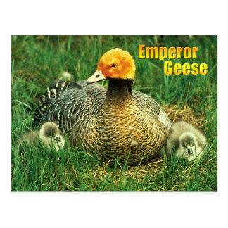 Ganso y polluelos del emperador postal