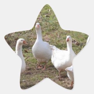 Gansos blancos calcomania forma de estrella personalizada