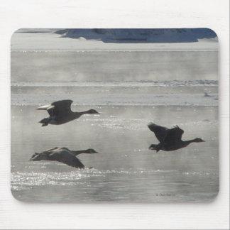 Gansos canadienses B0047 sobre el río congelado Mousepads