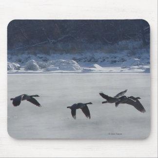 Gansos canadienses B0048 sobre el río congelado Alfombrilla De Raton