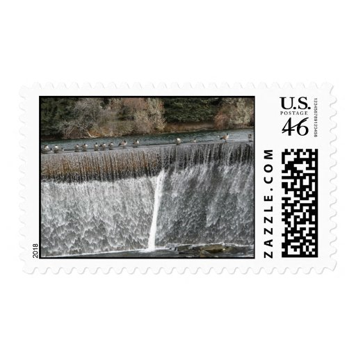 Gansos canadienses en un río franqueo