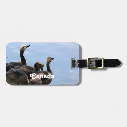 Gansos canadienses etiqueta para maleta