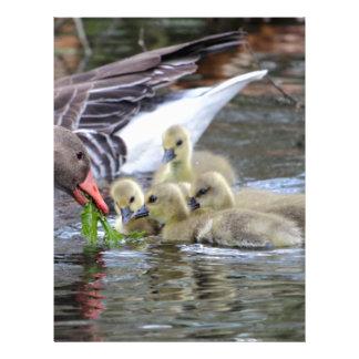 Gansos de ganso silvestre que alimentan los membretes personalizados