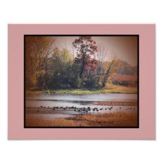 Gansos de la impresión 11x14 Canadá de la foto en  Fotografía