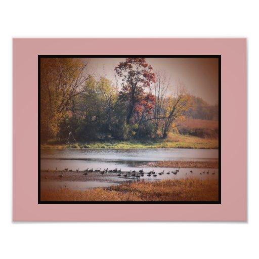 Gansos de la impresión 11x14 Canadá de la foto en