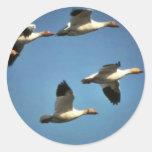 Gansos de nieve en vuelo pegatina redonda