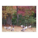 Gansos del otoño con rojo y hojas anaranjadas de l tarjetas postales