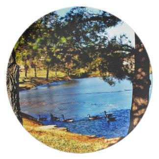 Gansos que nadan en el lago a medias congelado - á plato de comida